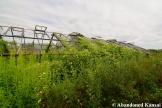 Overgrown Abandoned Greenhouse