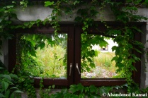 Overgrown Windows