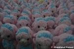 Same Stuffed Animal